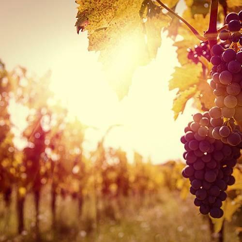 ღვინის ტურიზმის პერსპექტივები